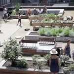 GoodPlanet Belgium – projet de Jardin intergénérationnel au CPAS St Josse