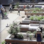 GoodPlanet Belgium - projet de Jardin intergénérationnel au CPAS St Josse